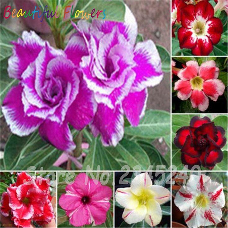 Resultado de imagen para plantas ornamentales CHOCOLATE FLOWERS