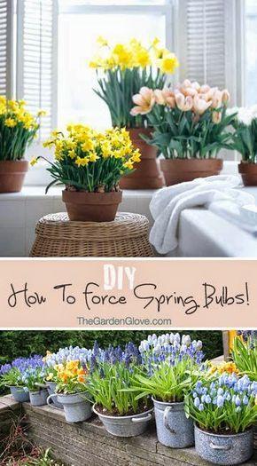 17 Best Ideas About Spring Bulbs On Pinterest Bulbs
