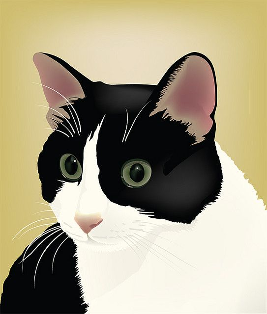Domestic Cat Illustration by mberggr, via Flickr  If the white stripe was over the other eye, this would be Skye!
