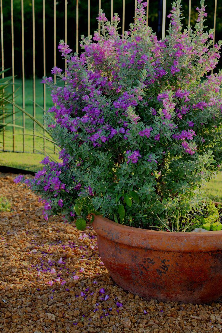 Mejores 24 im genes de color en pinterest decoracion for Jardines verticales historia