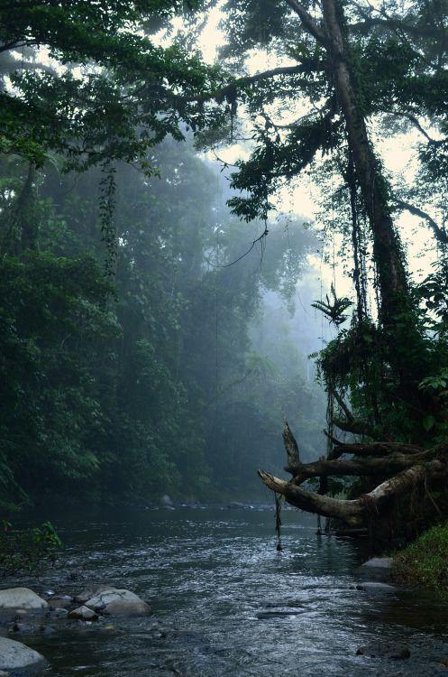 Koloki River Monrning | Solomon Island (by Thomas M. Perry)