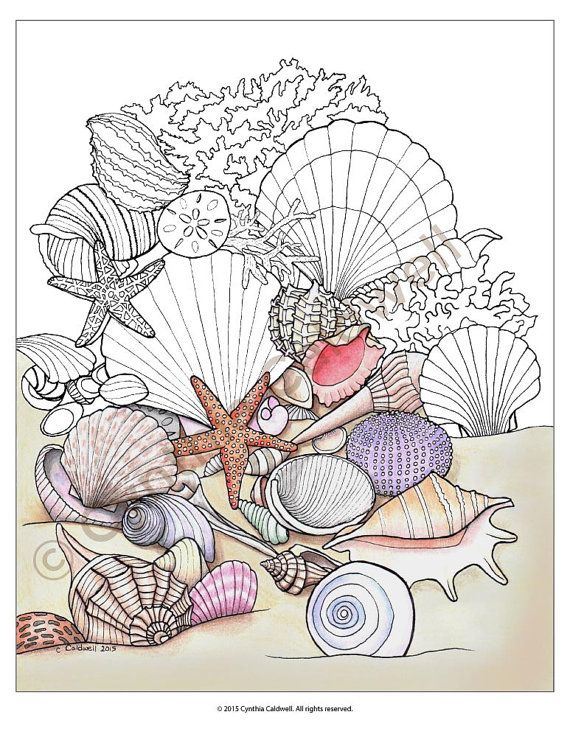 Seashells Coloring Page Instant Download by YetAnotherMomShop