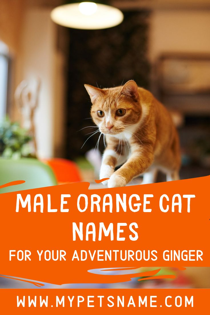 Orange Is Apparently Meant To Be The Color Of Adventure So Purrhaps Name Your Ginger Kitty After A Famous Swashbuckling Adventurer S Cat Names Cool Pet Names
