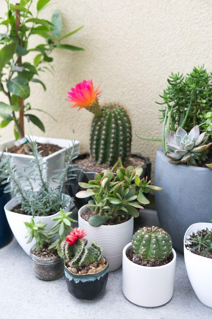Die Besten 17 Bilder Zu Gardening & Flowers Auf Pinterest | Gärten ... Nelken Im Garten Pflanzen Arten Blumen Tipps