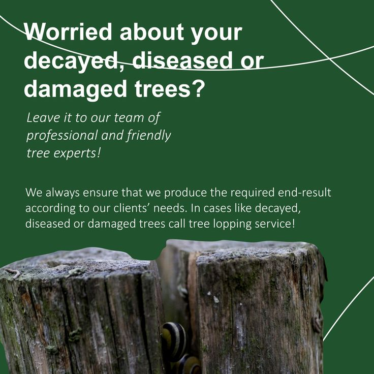 For decayed, diseased or damaged trees, contact us for help. Our team of professional and friendly tree experts are here to help.