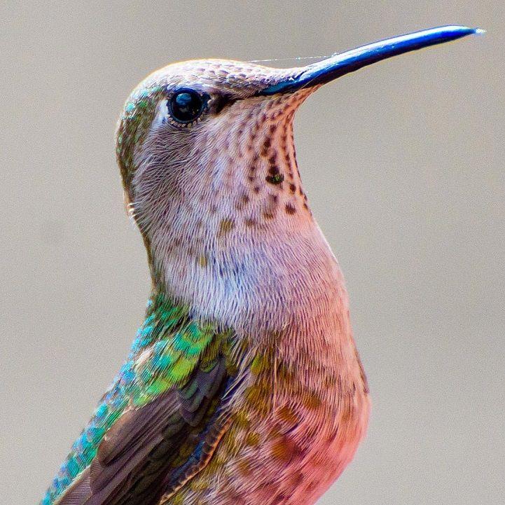 Hummingbird Whisperer, Tracy Johnson, Captures Close-Up  of Birds Visiting Her Backyard - My Modern Met