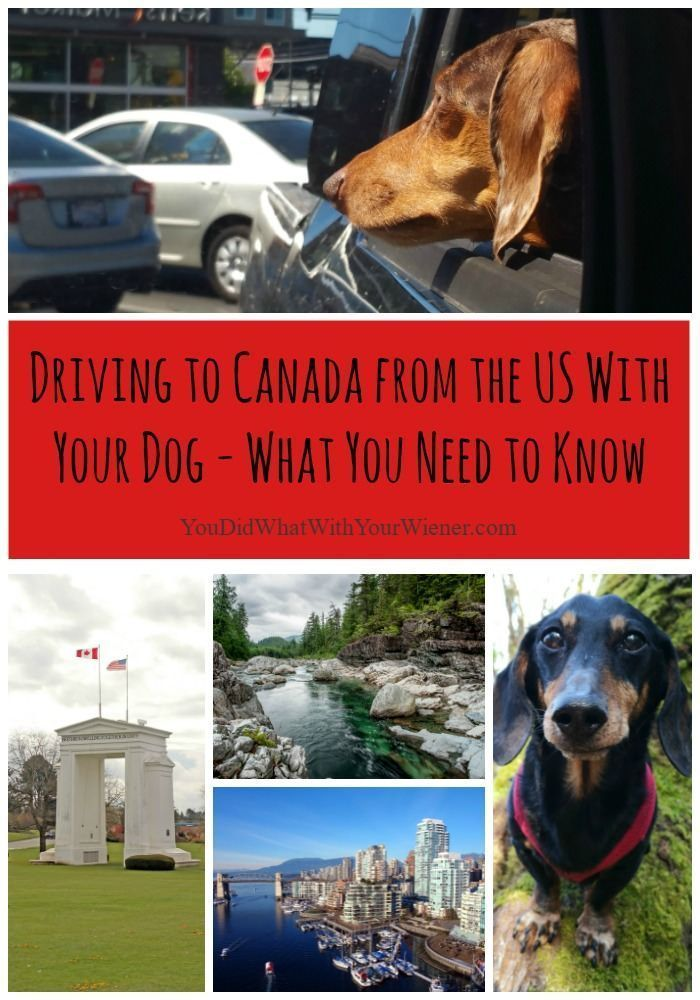 Things You Must Know Before Driving Across The Canadian Border With Your Dog In 2020 Road Trip With Dog Dog Travel Pet Travel