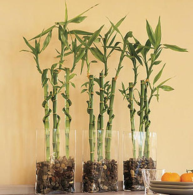 3 stalks of Lucky Bamboo: Bring Happiness, wealth, and longevity.   10 stalks of Lucky Bamboo: Complete and perfect
