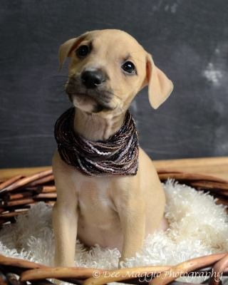 Princess Kate.  I love what this photographer is doing for these precious babies and the Last Day Dog Rescue center.  She is a true Angel!  http://www.facebook.com/pages/Dee-Maggio-Photography/136248176432563?sk=wall&filter=2