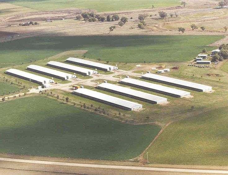 commercial poultry house pictures | Aerial shot of a modern broiler farm