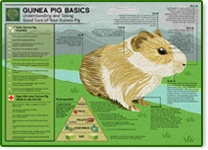 March is Adopt a Guinea Pig Month - Find out if a Guinea Pig may be the right pet for you!