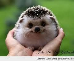 Image result for cutest animals ever