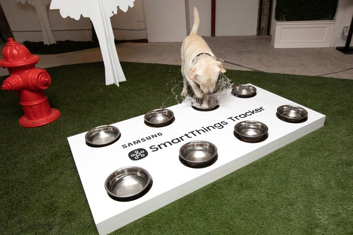 19 Fetching Ideas From These Dog Friendly Events In 2020 Pet Event Dog Friends Up Dog