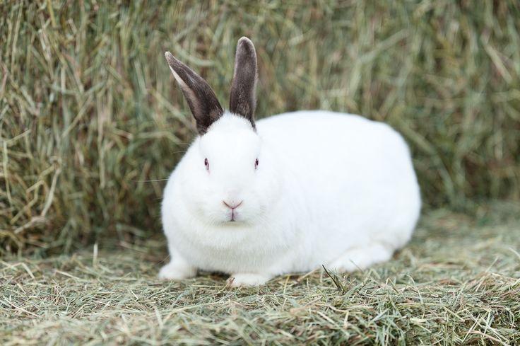https://flic.kr/p/9F5TeB | Killer Rabbit of Caerbannog | That's no ordinary rabbit!
