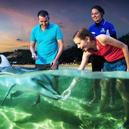 Paket Murah Australia. You will be invited to feeding the dolphins in Tangalooma or enjoy a more exciting experience in Gold Coast. Price starting from Rp 1.750.000 including hotel, breakfast and transfer. Contact us 021 500833 or visit ezytravel.co.id for booking and more information.