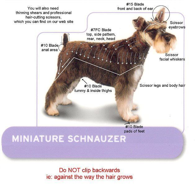 The Best Dog Clippers For Schnauzers Top 5 Picks In 2020