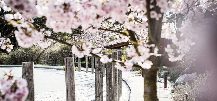 singel dejting japanskt spa stockholm