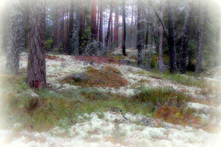 Kuljen metsässä hiljaa: Teemat