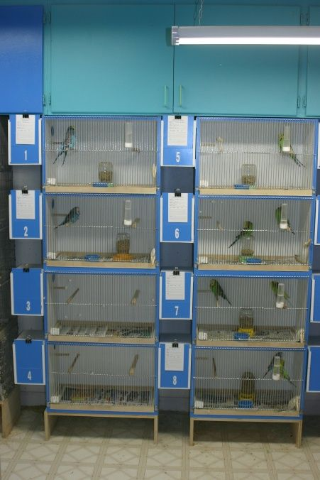 Budgie Breeding Cages Related Keywords & Suggestions - Budgie Breeding Cages Long Tail Keywords