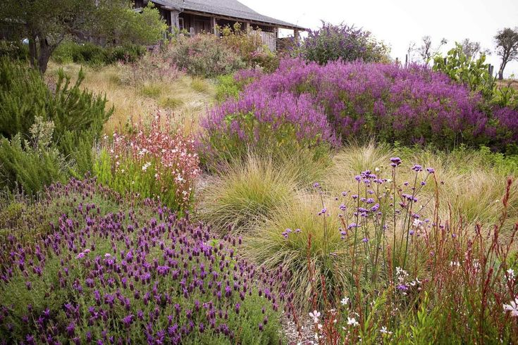 Expert Advice: 8 Tips for a Meadow Garden from Grass Guru John Greenlee: Gardenista