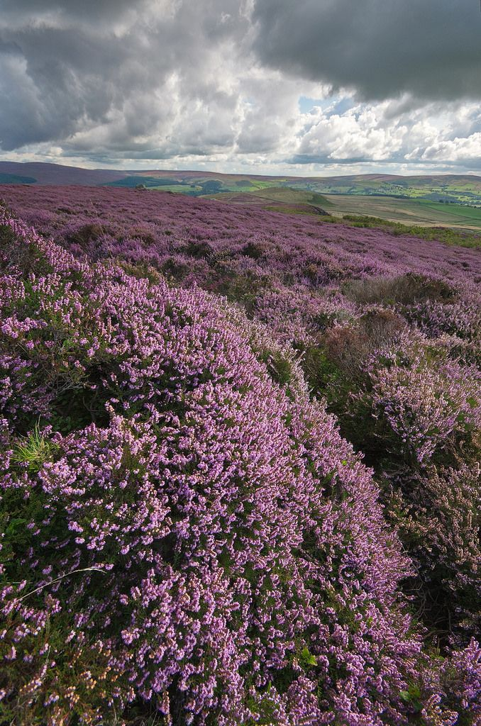A view looking across Barden Moor near Skipton in the Yorkshire Dales.