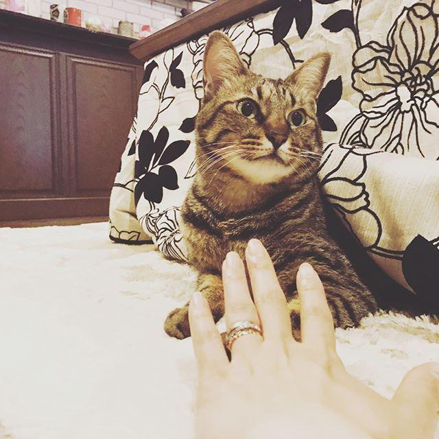 おはようございます☀ #我が家#5人目#愛猫#マリー#かなりの#人見知り#そんなお年頃#可愛すぎる#仕事#1カ月ぶり#再開#ため息しかでない#笑#そんなお年頃#さぁ#今日も頑張ろう ☆ ☆ #ねこ#猫#ネコ#ネコ部#cat#リビング#可愛い#激愛