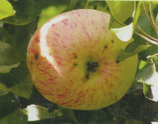 МИРАГРО.com - сельскохозяйственный портал. Сельскохозяйственная доска объявлений. Агро-форум.