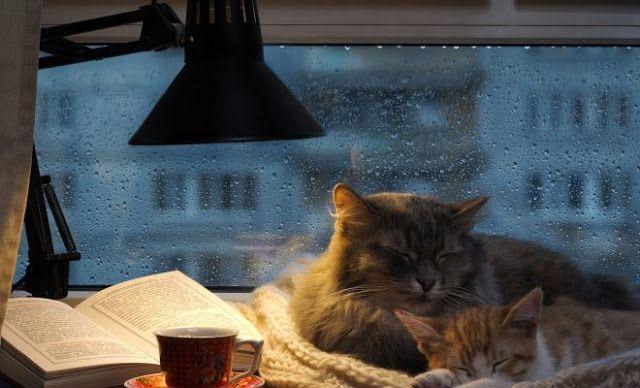 5 cărți de citit într-o seară ploioasă
