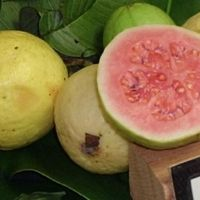 Guava Duff Recipe