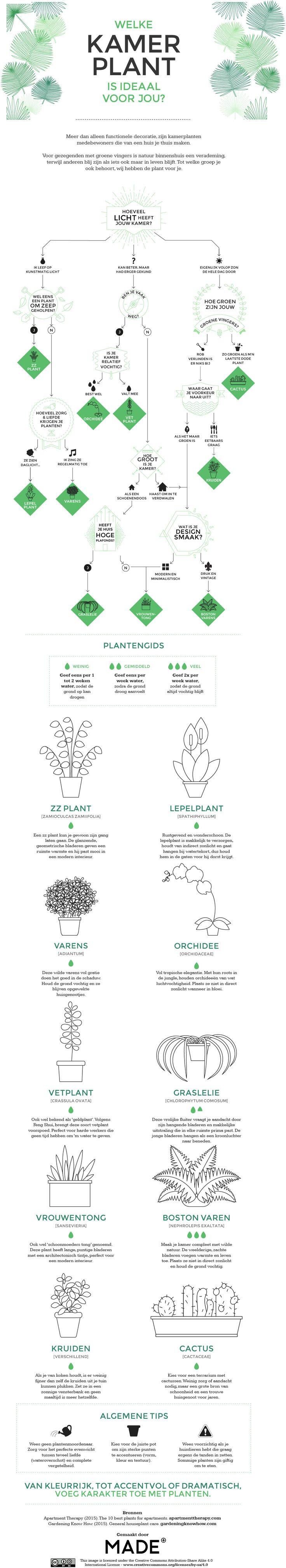 Planten zijn super goed voor je! Ze nemen het broeikasgas CO₂ op, zuiveren de lucht en zijn goed voor je concentratie. Wil jij graag meer groen in huis, maar heb je geen idee wat voor soort plant bij je past? Doe de test!…