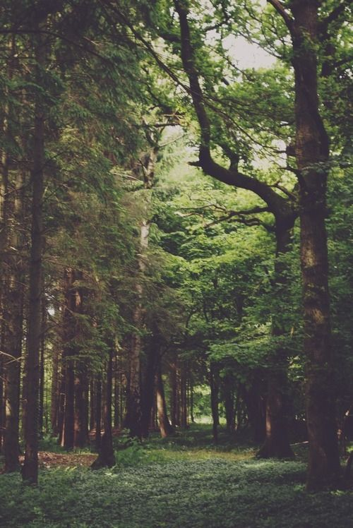 nature forest woods - photo #19