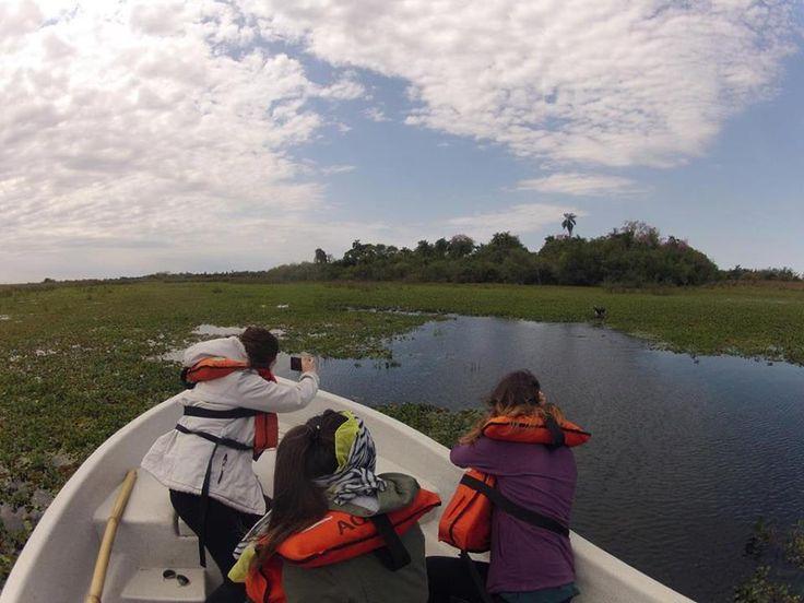 Conectando con la naturaleza en los esteros del #Iberá #Corrientes! Más en https://www.facebook.com/CorrientesIntensa y https://www.facebook.com/Viajaportupais #Aventura #ArgentinaEsTuMundo #Viajes
