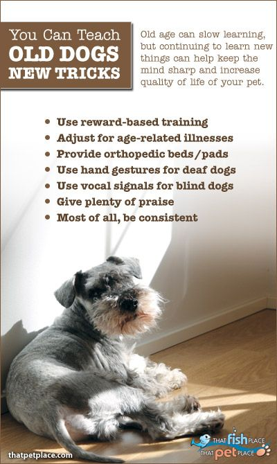 You Can Teach an Old Dog New Tricks | Psychology Today