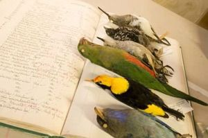 Queensland Museum school programs - Biodiversity and Classification (Year 7-12)