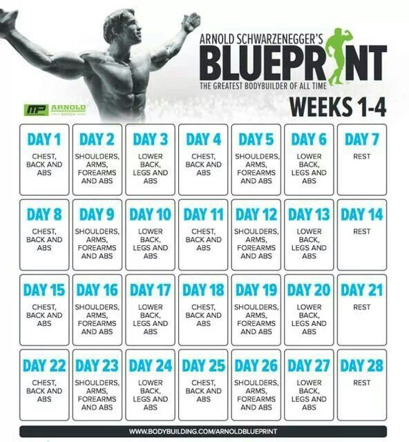 91 best gym mems images on pinterest health fitness workout humor going to use the arnold blueprint and musclepharm workouts next month to try and bulk up a bit malvernweather Choice Image