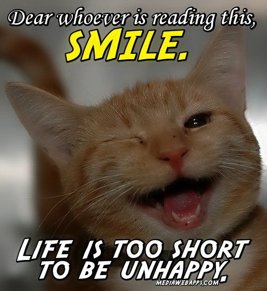 Smile!  Did I tell you I have two cats too... he he  The dog and cats love one another... Yes... REALLY!!  he he