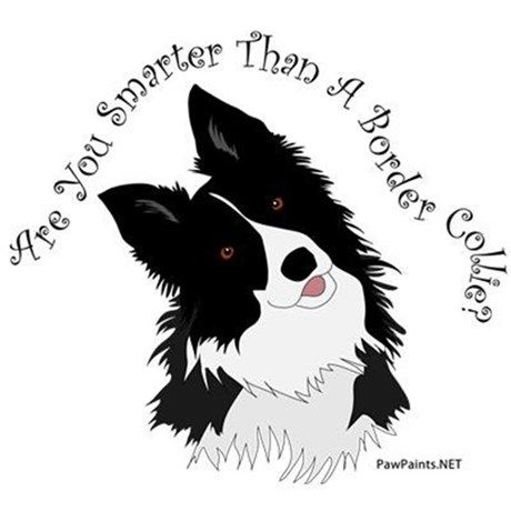 Are You Smarter Than A Border Collie products feature original vector art by PawPaints.NET with a black and white border collie. A portion of all profits goes to support border collie rescue