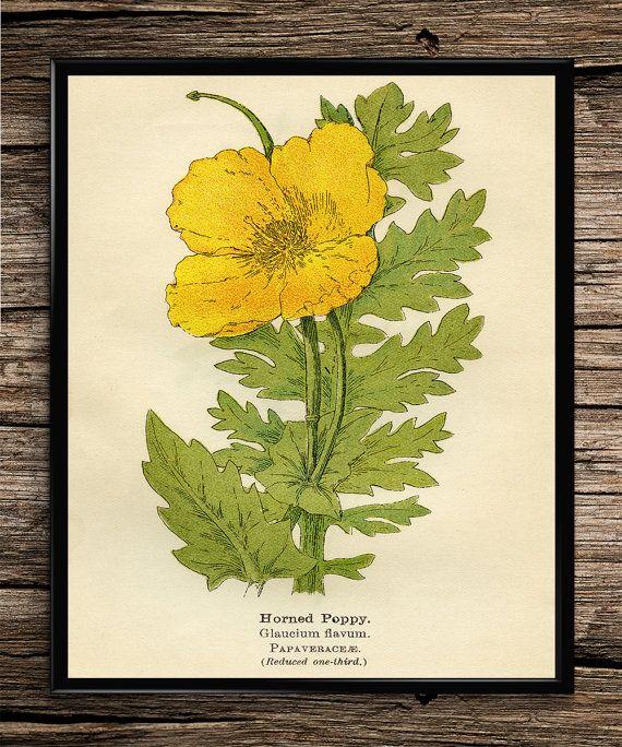 Botanical Flower Set Vintage Prints by UniquelyGiftedArt on Etsy