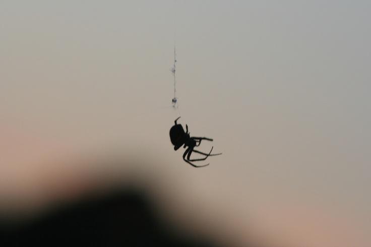 Black widow.....