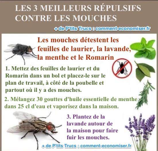 Marre des mouches qui tournent autour de vous toute la journée ? C'est vrai que c'est bien énervant et pas super hygiénique ! Mais pas besoin de répulsifs chimiques pour vous en débarrasser.  Découvrez l'astuce ici : http://www.comment-economiser.fr/3-meilleurs-repulsifs-contre-les-mouches-simples-et-naturels.html?utm_content=buffer9d2d2&utm_medium=social&utm_source=pinterest.com&utm_campaign=buffer