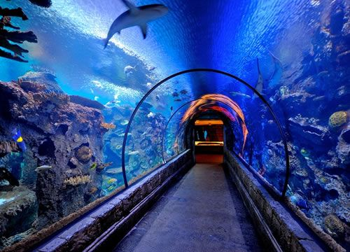 Shark Reef Mandalay Bay Top 10 things to do in Las Vegas