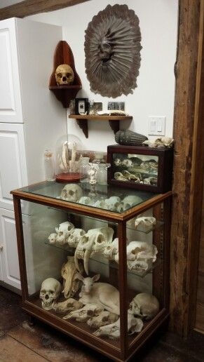 Cabinet of curiosity, taxidermy, skulls done by the cleaning crew ( my family ) with the Mad Taxidermist : Rob Reysen www.lakeviewtaxidermy.com