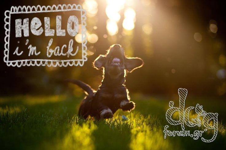 #hello #happydog