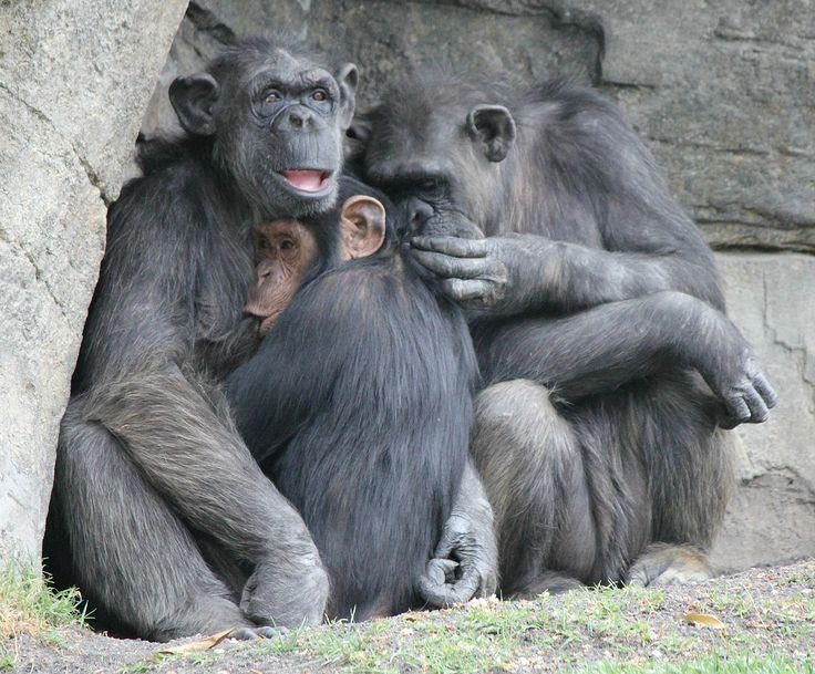 Monkey family. Bioparc 2014.