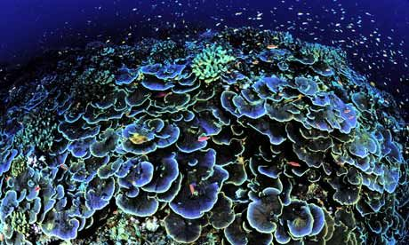 Google Image Result for http://static.guim.co.uk/sys-images/Guardian/Pix/pictures/2009/1/7/1231296880873/A-coral-seen-off-Jarvis-I-002.jpg
