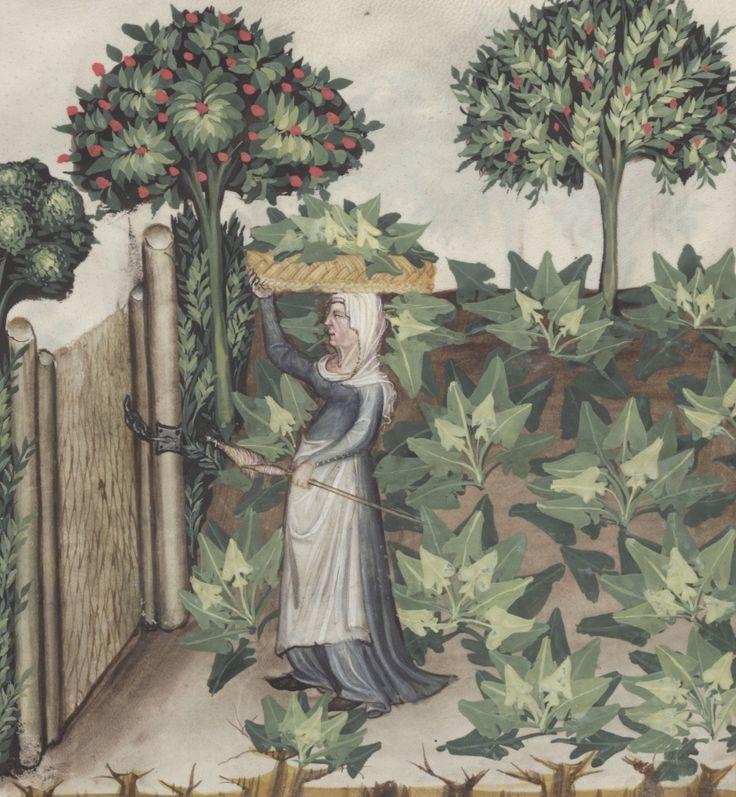 Woman during harvest in spinach garden - Spinachie | Österreichische Nationalbibliothek - Austrian National Library | Public Domain