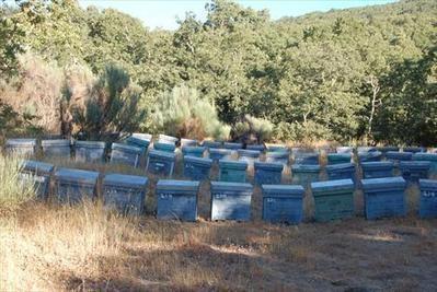 Las abejas, alejadas de la mano del hombre, garantizan la biodiversidad