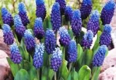 Fall Planted Flower Bulbs For Sale Online | Buy Fall Planted Bulbs At Eden Brothers