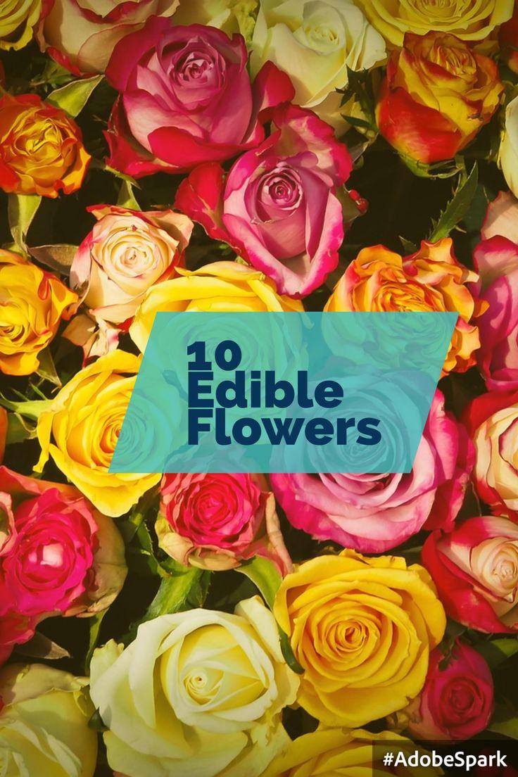 #Fiori #commestibili #edible #flowers #rose #rosa #roses #yellow #giallo #pink #white #bianco #gnam #cibo #food #eatflowers #mangiarefiori #flowerpower #iloveflower #amoifiori