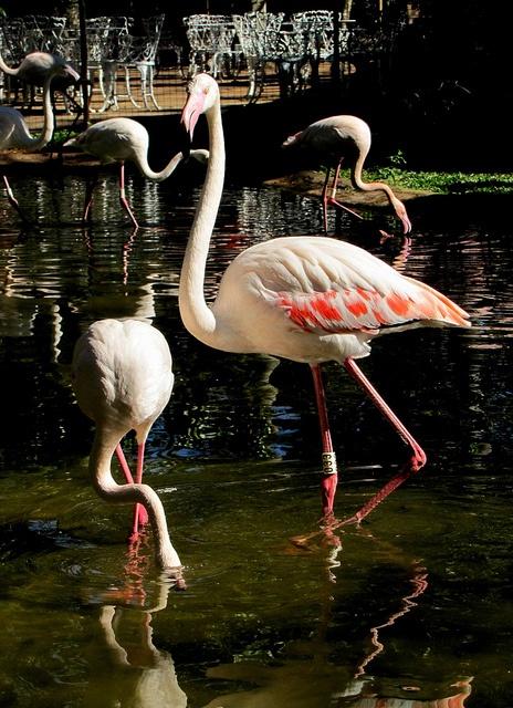 Bird Park, Foz do Iguaçu (Paraná, Brazil)